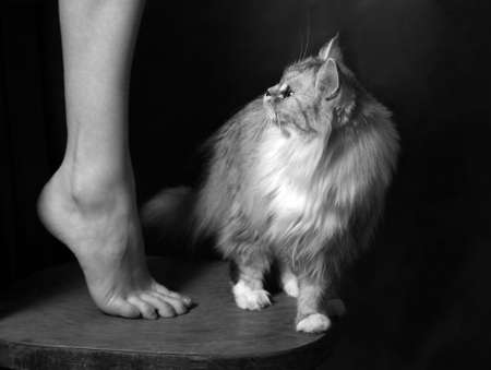 Beautiful leg of the woman and cat photo