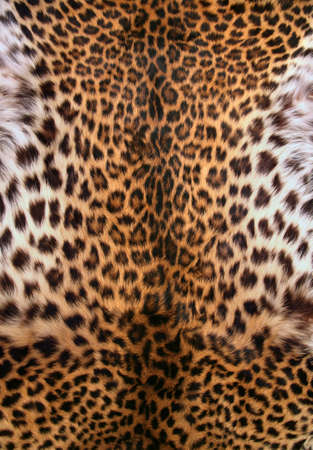 leopard fur: Full screen high resolution shot of a skin of the leopard. Good for a texture or a background Stock Photo