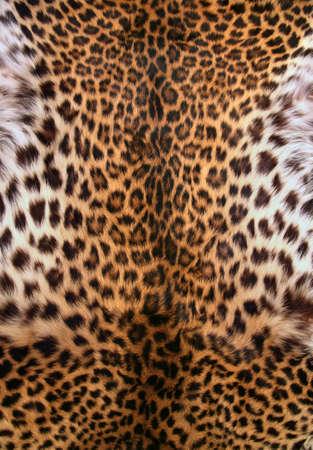 manteau de fourrure: Full Screen Shot haute r�solution d'une peau de l�opard. Bon pour une texture ou un fond Banque d'images