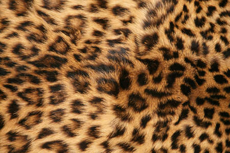 leopard skin: Full screen high resolution shot of a skin of the leopard. Good for a texture or a background Stock Photo