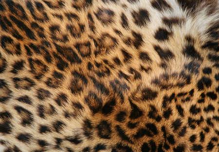 Voll-Bildschirm mit hoher Aufl�sung Schuss eines Haut des Leoparden. Gut f�r eine Textur oder ein Hintergrund  Lizenzfreie Bilder