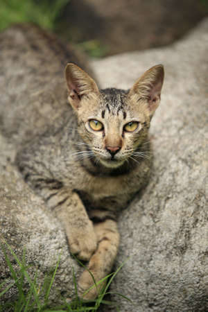waif: The homeless cat lays on a stone