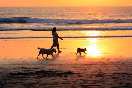 The woman walks two dogs on a sunset photo
