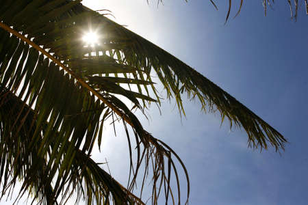 Sheet of a palm tree on sky Stock Photo - 4455595