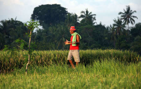 Bali. Indonesia, 23 October 2007: Worker in rice field 23 October 2007 on Bali, Indonesia.