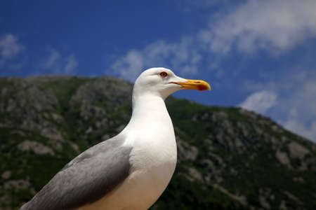 seacoast: The big seagull on seacoast Stock Photo