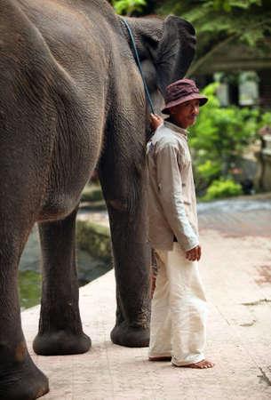 Indonesia, Bali 30 october 2007: The big elephant holds a trunk the man 30 october 2007 on Bali. Indonesia Stock Photo - 7137868
