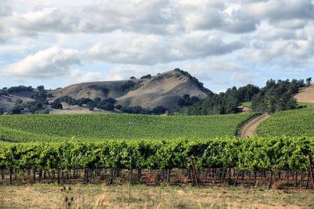Vineyard im Weinanbaugebiet Napa in Kalifornien.