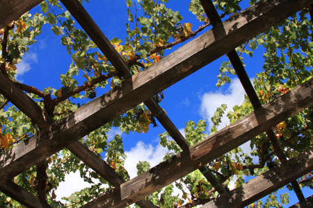 napa: Vineyard in the wine growing region of Napa in California.