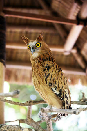 investigating: Portrait of an owl. Bali a zoo