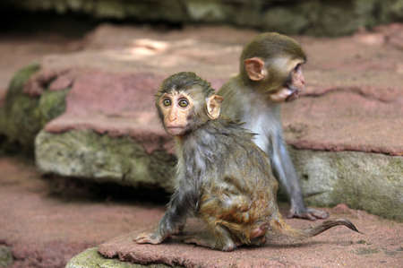 Two small monkeys  Park of monkeys in China photo