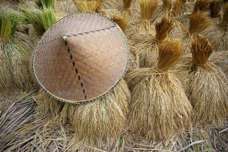 arroz chino: El arroz con cáscara en campo y un sombrero tradicional