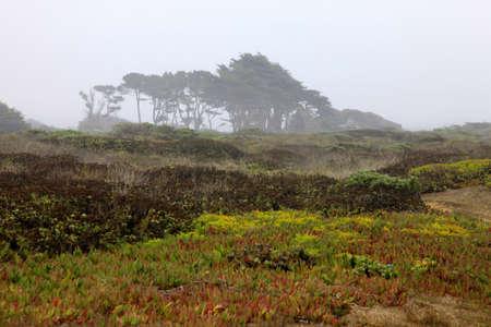 monterey: Foggy autumn morning in California. Half Moon Bay Stock Photo
