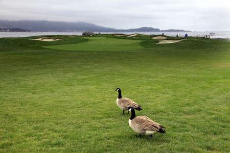 golf of california: Luxury Golf Course Asilomar California Near Monterey