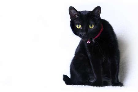 Black cat on white background in studio Stock Photo - 17189754