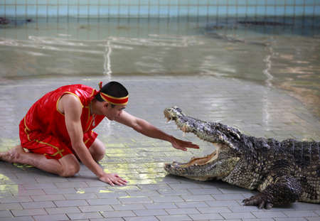 teases: THAILAND, PATTAYA 02 NOVEMBER: Traditional for Thailand Show of crocodiles . A zoo keeper teases a crocodile 02 november 2009. Thailand, Pattaya
