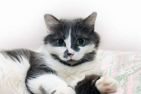 Portrait of a cat on white background Stock Photo - 20993199