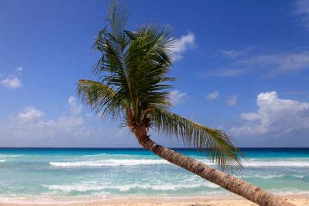 Plage tropicale intacte avec un palmier à la Barbade