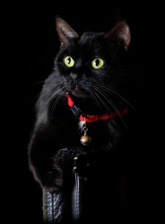 Black cat with green eyes on black background