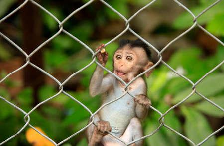 biped: The child of monkeys. Cambodia Stock Photo