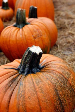 pumpkin seeds: Many pumpkins. Fair of a pumpkin in California