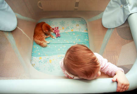 playpen: Little girl and red cat in the playpen