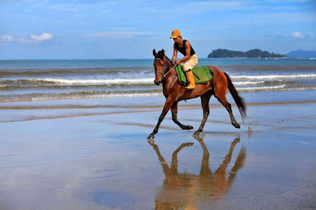 malaisia: Kota Kinabalu, Malaysia - Jenuary 12, 2015: A horse galloping on the beach Borneo in Malaysia. The beaches, bounded by sand dunes and the sea skirt the coast of Borneo and extend unbroken for many miles, and with relatively few people the open spaces are