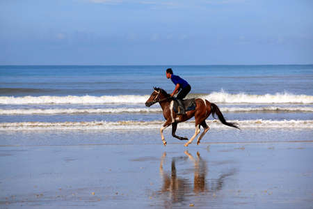 unbroken: Kota Kinabalu, Malaysia - Jenuary 12, 2015: A horse galloping on the beach Borneo in Malaysia. The beaches, bounded by sand dunes and the sea skirt the coast of Borneo and extend unbroken for many miles, and with relatively few people the open spaces are