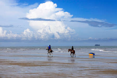 unbroken: Kota Kinabalu, Malaysia - Jenuary 07, 2015: A horse galloping on the beach Borneo in Malaysia. The beaches, bounded by sand dunes and the sea skirt the coast of Borneo and extend unbroken for many miles, and with relatively few people the open spaces are  Editorial