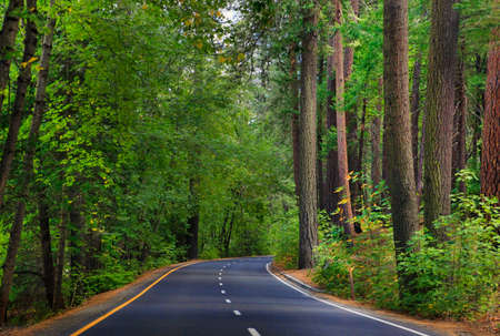run faster: Forest road in Yosemite National Park