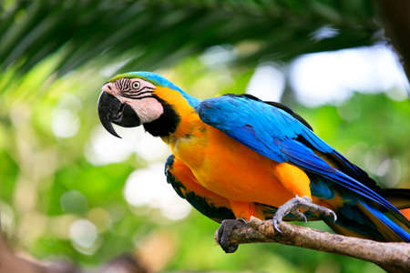 guatemala: Parrot on a branch. Park of birds. Bali. Indonesia