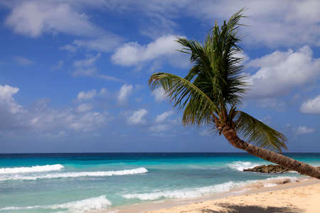View of nice tropical beach with palm. Barbados Stock Photo