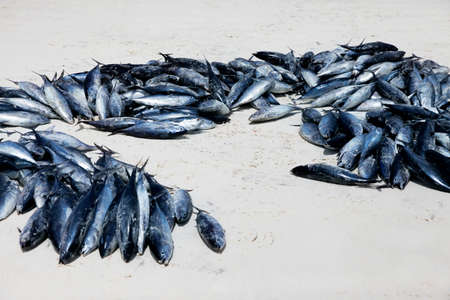 unpleasant smell: Line fish stacked on a table at the Stone Town Fish Market in Zanzibar. Stock Photo