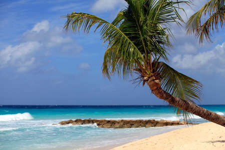 cerulean: View of nice tropical beach with palm. Barbados Stock Photo