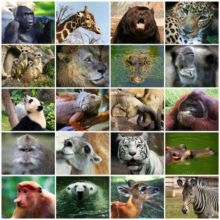 lizard in field: Collage con diferentes caras de animales.