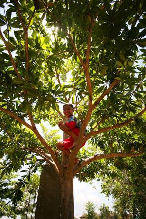 boyhood: Bali, Indonesia - October 23, 2007: asian cheerful little boy sits on a tree on the island of Bali in Indonesia Editorial