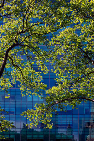 architectural exteriors: Spring blossoming trees on the background of office building Stock Photo