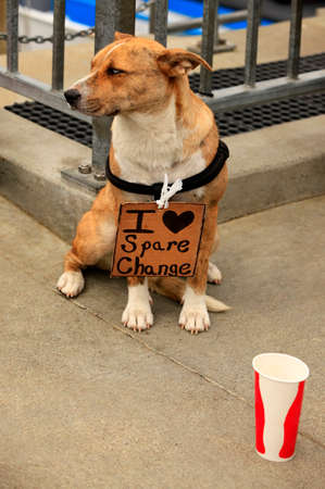 begs: The sad lonely dog on street Stock Photo