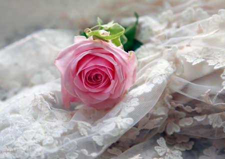 anillos boda: Rosa rosa sobre un fondo de un velo