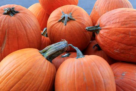 autumn colour: Many pumpkins. Fair of a pumpkin in California