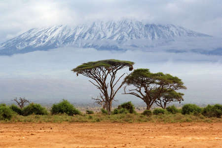 mount: Mount Kilimanjaro, Kenia, the highest mountain in Africa. Stock Photo
