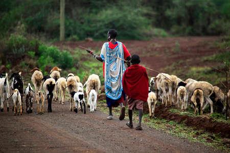 Mombasa, Kenya - January 01, 2017: Kenyan family Masai herding goats. Mombasa, Kenya Editorial