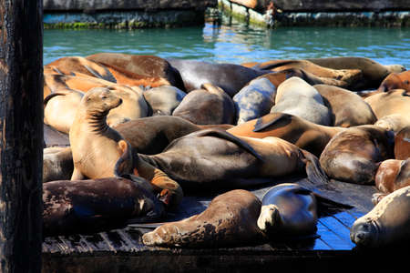 profile picture: This is PIER 39 and the sea lions in San Francisco.