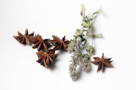 vanishing point: Star anise spice fruits and mint isolated on white background Stock Photo