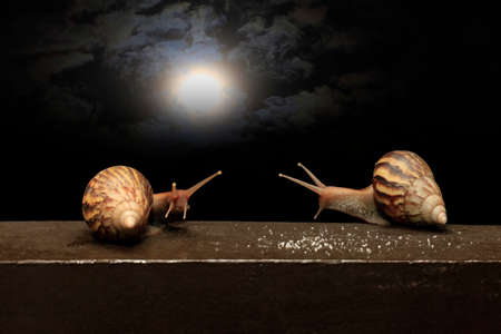 Two snails against the background of the night sky with the moon Stock Photo