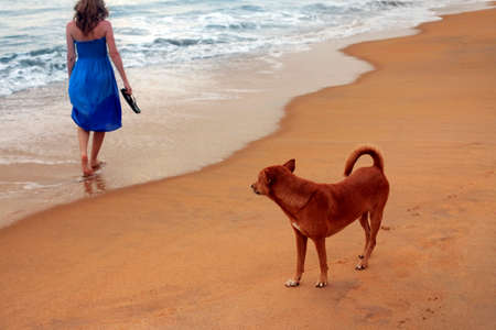 Red dog and the lonely girl at coast photo