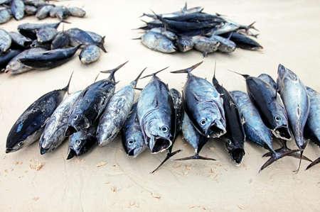 Lijnvissen op een lijst bij de Stone Town-Vismarkt in Zanzibar worden gestapeld die. Stockfoto