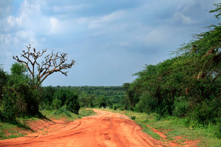 Park Tsavo East National in Kenya