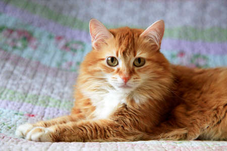 Portrait of a young red-haired cats Stock Photo