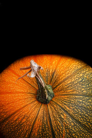 Pumpkin on a black background. Stock Photo